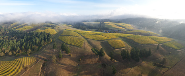 Aerial view over WillaKenzie Estate, Willamette Valley, Oregon