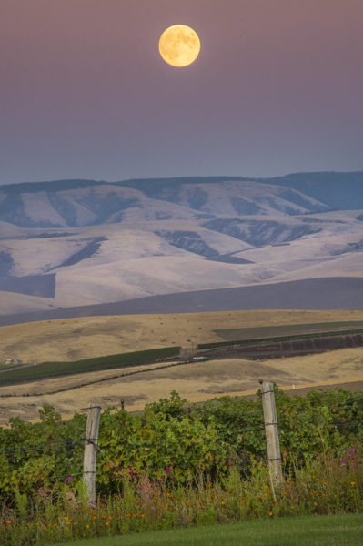 Harvest moon at Doubleback vineyard, Walla Walla, Washington