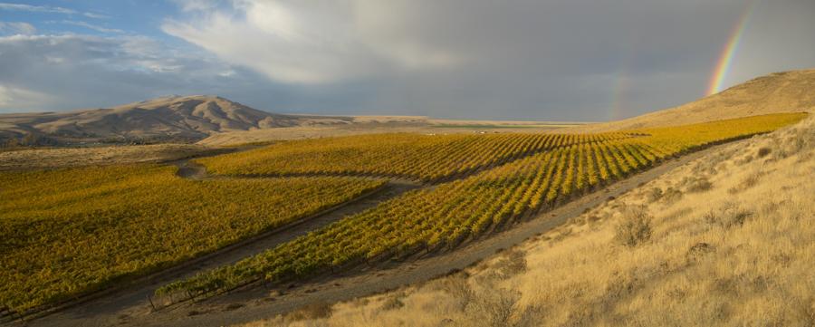 Double rainbow over Red Mountain AVA vineyards, Yakima Valley, central Washington