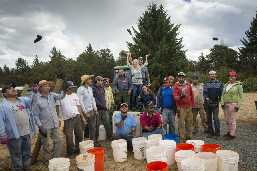 Harvest crew, Willamette Valley Vineyards, Oregon