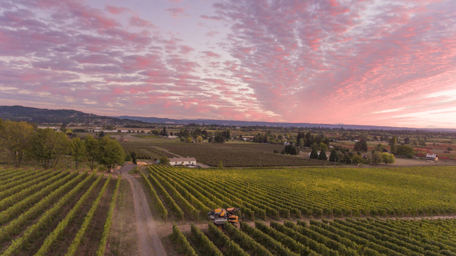 Drone shot over Montinore wine harvest