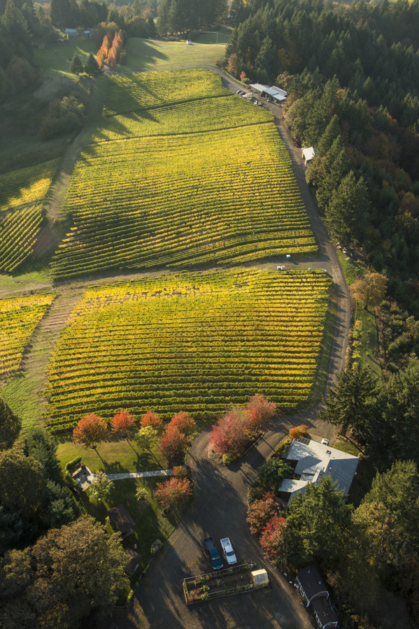 Helicopter photo over Kramer Vineyards