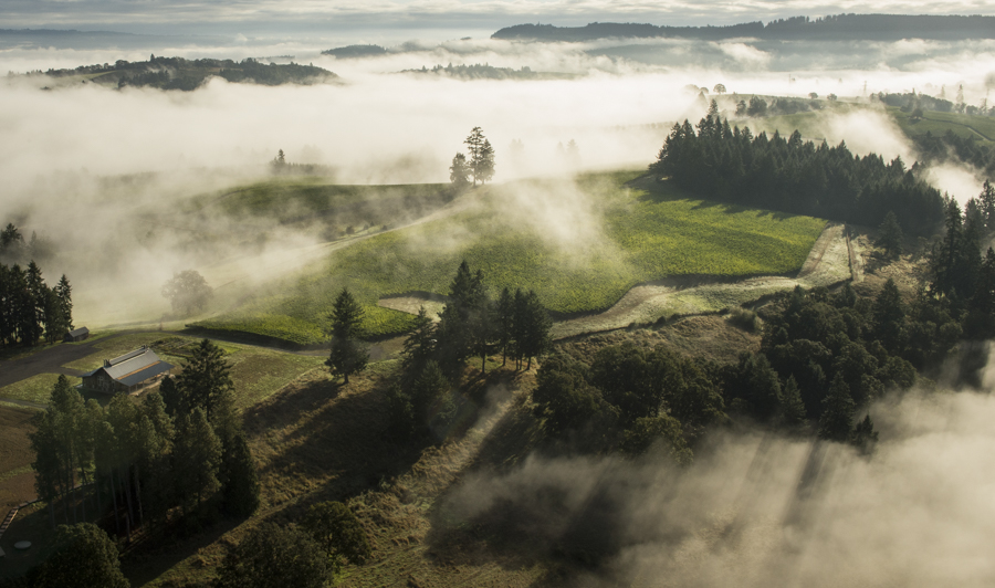 Helicopter aerial through the fog over Soter vineyard