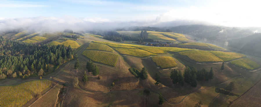 Helicopter panoramic stitch photo over WillaKenzie Estate