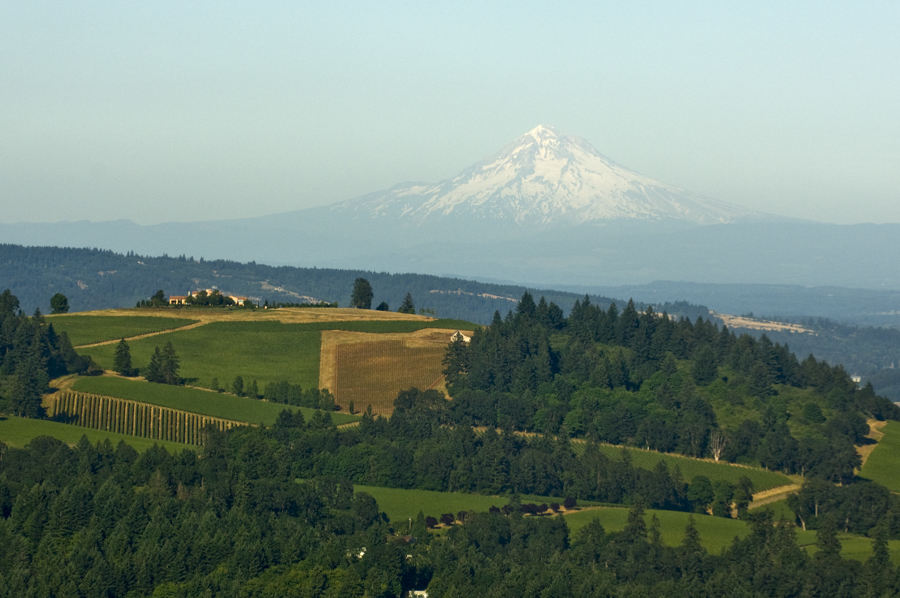Airplane shot with long lens over Dundee Hills vineyards with Mt. Hood