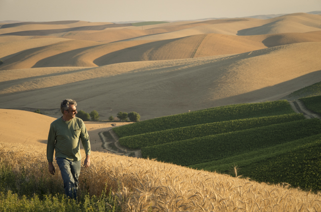 Serge, winemaker for Spring Valley Vineyards, walking past wheat fields and vineyards